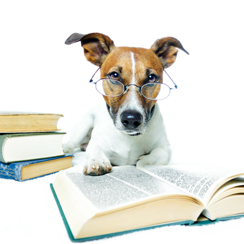 type of pets essay The types of outlining for writing research papers this type is used primarily for revising the research paper after it has been written to create it.
